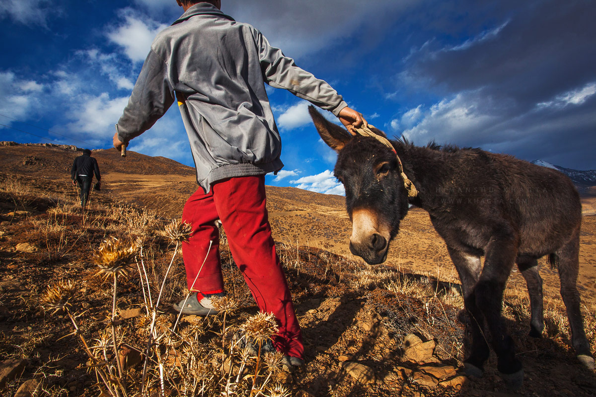 Norbu and Tenzing pulling their donkey up to the unpaved road to ride it back to their village, Tashi Gang. © Himanshu Khagta
